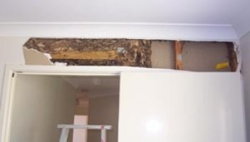 Warner termite inspection