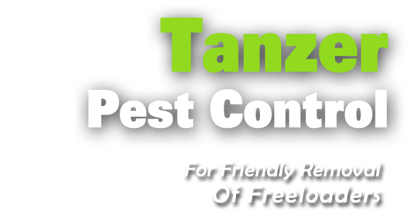 Tanzer Pest Control Brisbane and Caboolture